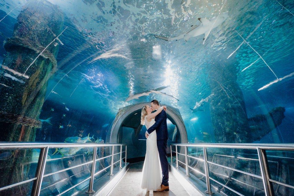 SEA LIFE Melbourne Aquarium Photos SEA LIFE Melbourne Aquarium Wedding Photographer 180428photography 046