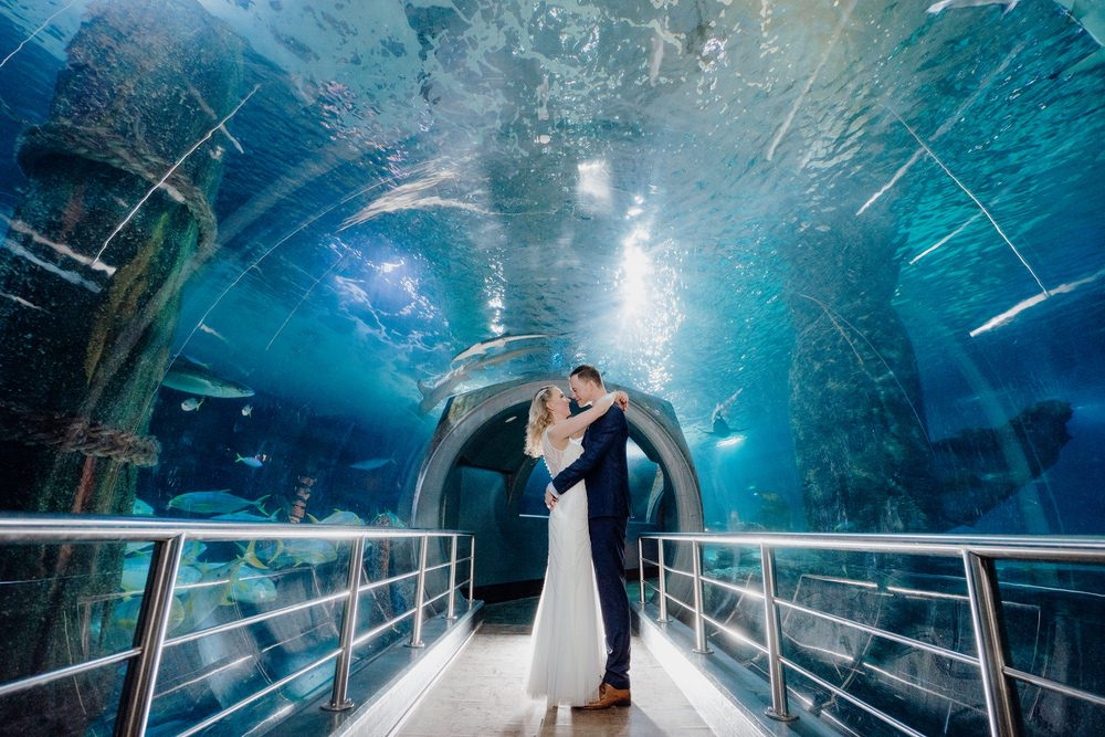SEA LIFE Melbourne Aquarium Photos SEA LIFE Melbourne Aquarium Wedding Photographer 180428photography 047
