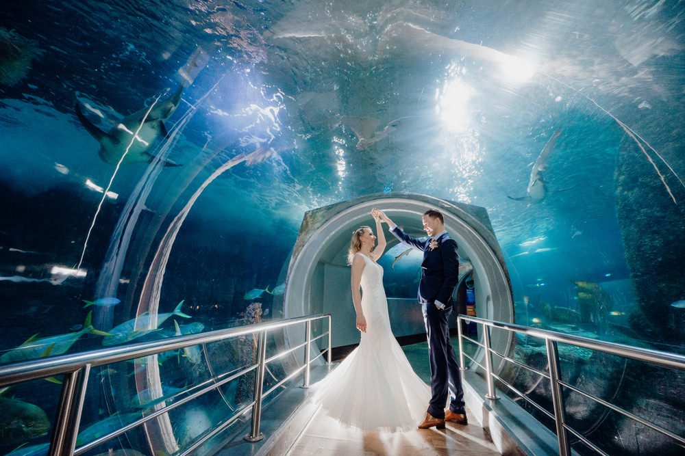 SEA LIFE Melbourne Aquarium Photos SEA LIFE Melbourne Aquarium Wedding Photographer 180428photography 051